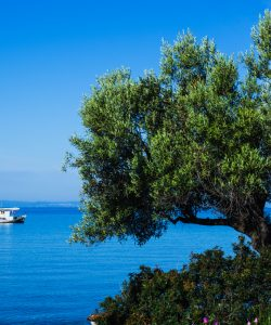 Chalkidiki: Blue waters, countless coves and beaches, lush landscape, and picturesque villages
